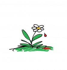 Dessin Franç. Fleur goutte de sang avec flaque