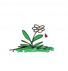 Dessin Fran. fleur goutte de sang sans flaque